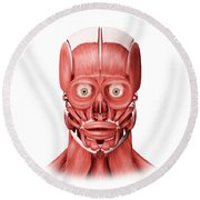 Medical Illustration Of Male Facial Round Beach Towel