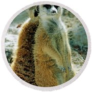 Meerkats Round Beach Towel
