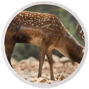 Mesopotamian Fallow Deer 2 Round Beach Towel