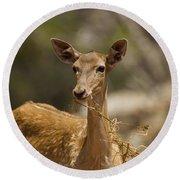 Mesopotamian Fallow Deer 3 Round Beach Towel