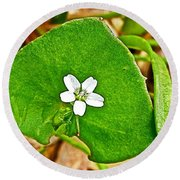 Miner's Lettuce In Park Sierra Near Coarsegold-california  Round Beach Towel