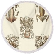 Molluscs Or Soft Worms Round Beach Towel