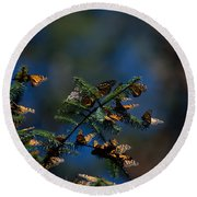 Monarch Butterflies Round Beach Towel