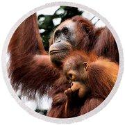 Mother And Baby Orangutan Borneo Round Beach Towel