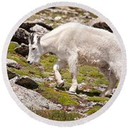 Mountain Goat On Mount Evans Round Beach Towel