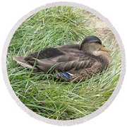Ms Mallard Round Beach Towel