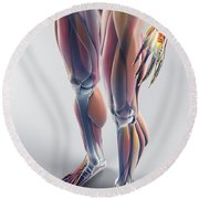 Muscles Of The Lower Body Round Beach Towel