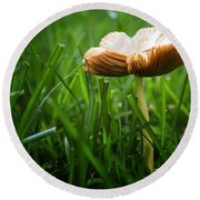 Mushroom Growing Wild On Lawn Round Beach Towel