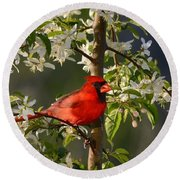 Red Cardinal In Flowers Round Beach Towel