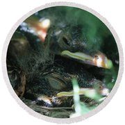 Nest Of American Robins Round Beach Towel