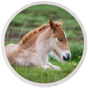 New Born Foal, Iceland Purebred Round Beach Towel