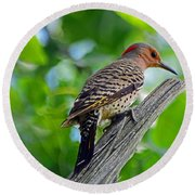 Northern Flicker Round Beach Towel