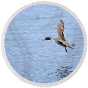 Northern Pintail Duck Round Beach Towel