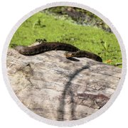 Northern Water Snake Round Beach Towel
