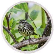 Northern Water Thrush Round Beach Towel