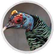Ocellated Turkey Portrait Round Beach Towel