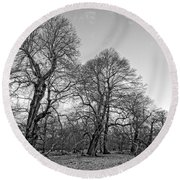 Old Trees Round Beach Towel