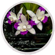 Orchid Flowers Growing Through Old Wooden Picture Frame Round Beach Towel