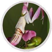 Orchid Mantis Round Beach Towel