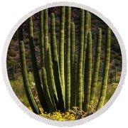 Organ Pipe Cactus  Round Beach Towel