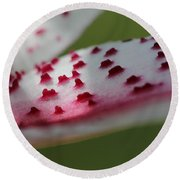 Oriental Lily Named Tiger Edition Round Beach Towel