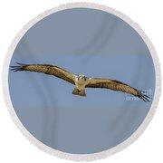 Osprey In Flight Round Beach Towel