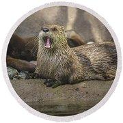 Otter North American  Round Beach Towel