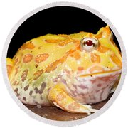 Pac Man Frog Ceratophrys Round Beach Towel
