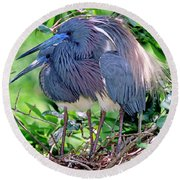 Pair Of Tricolored Heron At Nest Round Beach Towel