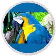 Blue Yellow Macaw. Parrot. Photo Of Bird Round Beach Towel