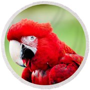 Parrot Round Beach Towel