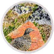 Partridge 2 Round Beach Towel