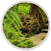 Path In Temperate Rainforest Round Beach Towel by Elena Elisseeva