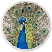 Peacock Full Plumage Round Beach Towel