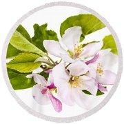 Pink Apple Blossoms Round Beach Towel