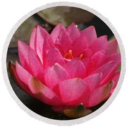 Pink Bloom... Round Beach Towel