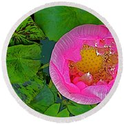 Pink Lotus In Backyard Of Home In Bangkok-thailand. Round Beach Towel