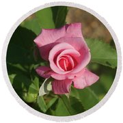Pink Rose... Round Beach Towel