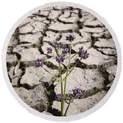Plant Growing Through Dirt Crack During Drought   Round Beach Towel
