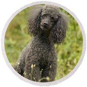 Poodle Dog Round Beach Towel