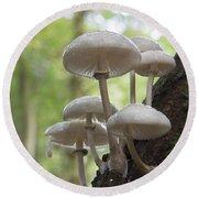 Porcelain Fungus Round Beach Towel