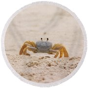 Portrait Of A Ghost Crab Round Beach Towel