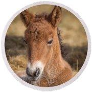 Portrait Of Newborn Foal Round Beach Towel