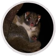 Possum Round Beach Towel
