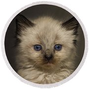 Precious Baby Kitty Round Beach Towel