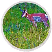 Pronghorn Among Wildflowers In Custer State Park-south Dakota Round Beach Towel