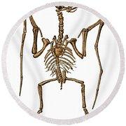 Pterodactylus, Extinct Flying Reptile Round Beach Towel