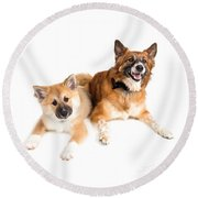 Icelandic Sheepdog Puppy And Adult  Round Beach Towel