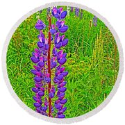 Purple Lupine On Campobello Island-nb Round Beach Towel