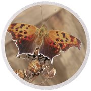 Question Mark Butterfly  Round Beach Towel